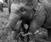 2011, rena effendi, thailand, elephant, elephants, ENP, is a tourist- Sangduen Chailert, extinct, endangered, sanctuary, wildlife